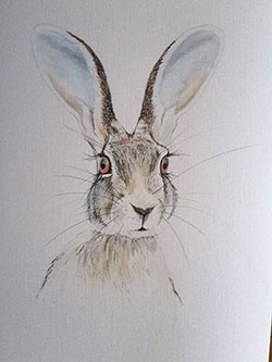 Indian Hare painting by Lesely Ann